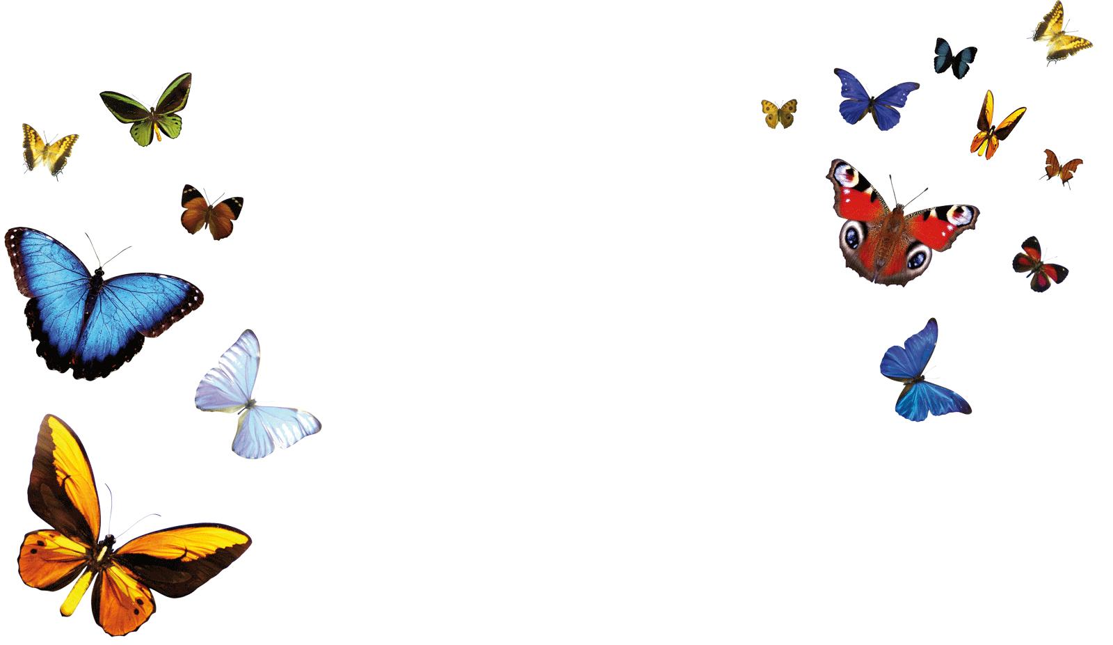Farfalle sfondo gea beauty group for Immagini farfalle per desktop